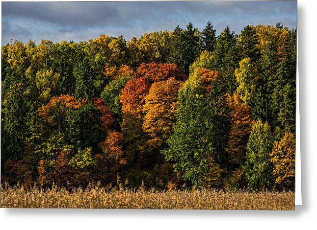 Autumn Greeting Card by Leif Sohlman