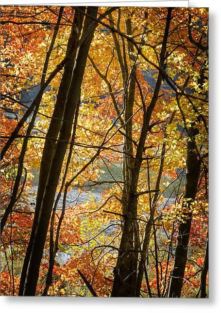 Autumn Light Greeting Card
