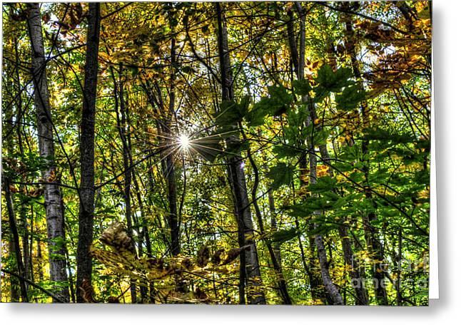 Autumn Lights  Greeting Card by Rich Fletcher