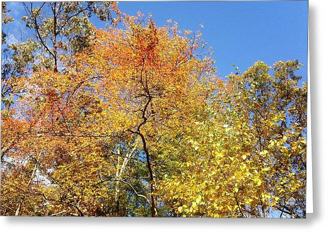 Greeting Card featuring the photograph Autumn Limbs by Jason Williamson