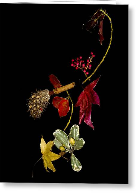 Autumn Line Greeting Card by Camille Lopez