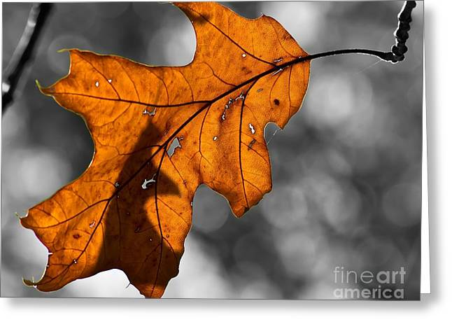 Autumn Loneliness Greeting Card