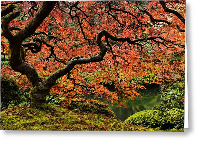 Autumn Magnificence Greeting Card