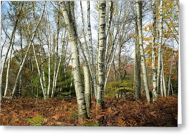 Autumn Majesty - Marion Brooks Natural Area Greeting Card