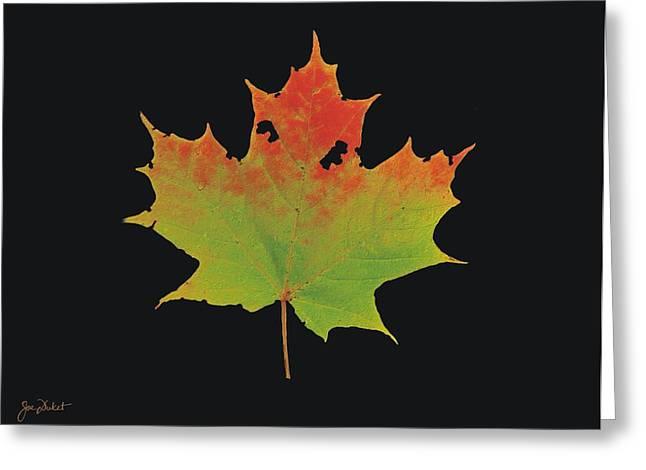 Autumn Maple Leaf 1 Greeting Card