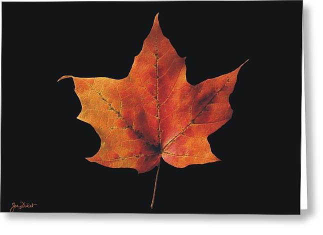 Autumn Maple Leaf 2 Greeting Card