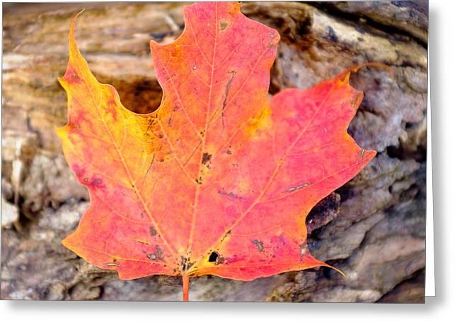 Autumn Maple Leaf On A Log Greeting Card