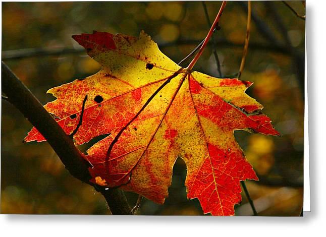 Autumn Maple Leaf Greeting Card by Richard Engelbrecht