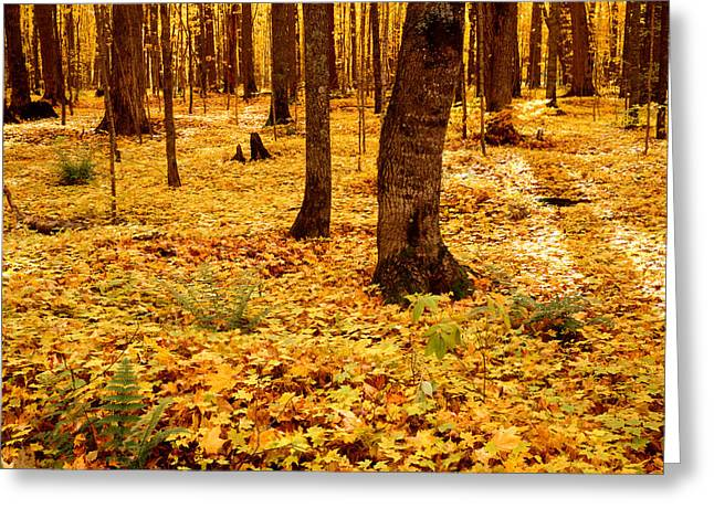 Autumn Maples Greeting Card by Tim Hawkins