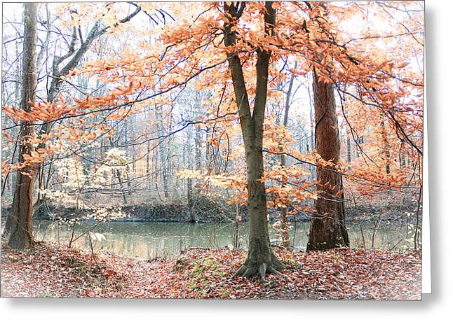 Autumn Mist Greeting Card by Lorna Rogers Photography