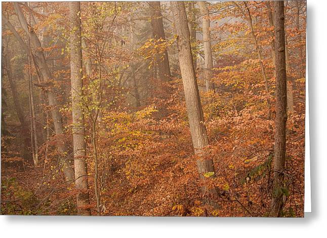 Greeting Card featuring the photograph Autumn Mist by Patrice Zinck