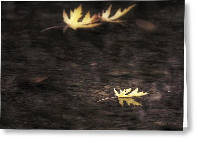 Autumn Mood - Fall - Leaves Greeting Card