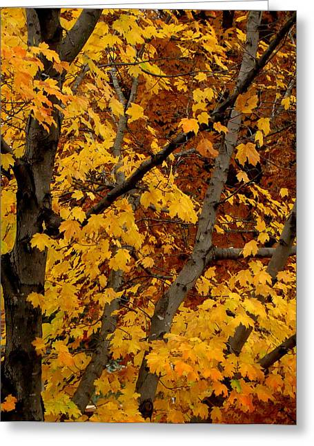 Autumn Moods 21 Greeting Card by Rodney Lee Williams