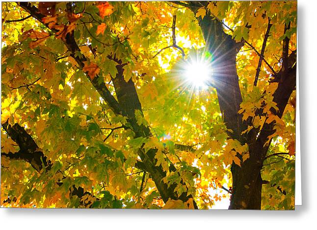 Autumn Morn Greeting Card by Dee Dee  Whittle