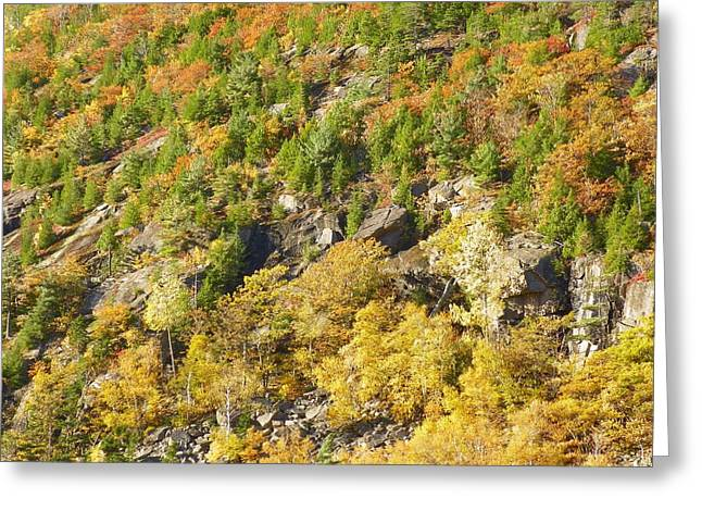 Greeting Card featuring the photograph Autumn Mountain Side by Gene Cyr