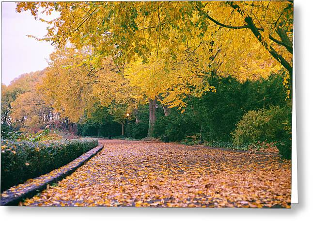 Autumn - New York City - Fort Tryon Park Greeting Card by Vivienne Gucwa