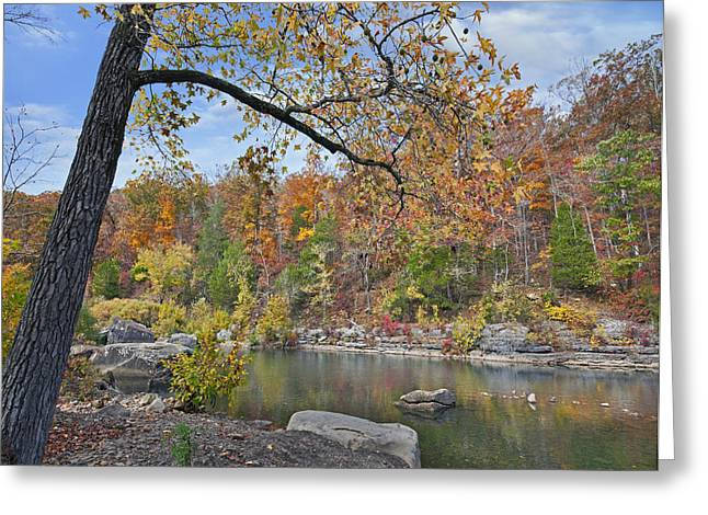 Autumn Oak And Hickory Forest Greeting Card by Tim Fitzharris