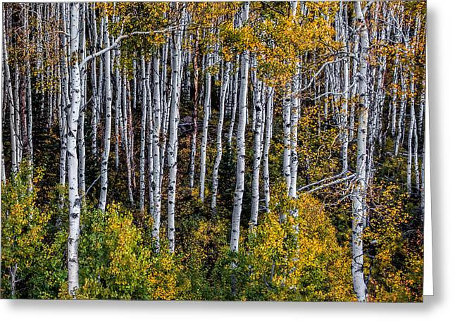 Greeting Card featuring the photograph Autumn On Mcclure Pass by Ken Smith