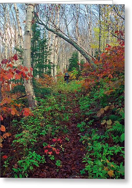 Autumn On Mount Hale Greeting Card
