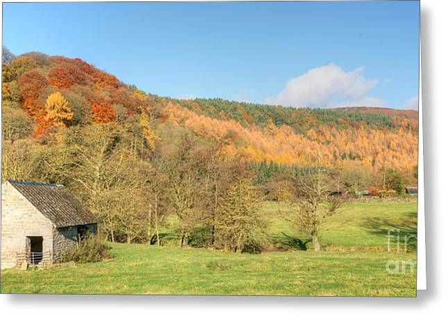 Autumn On The Hillside Greeting Card by David Birchall
