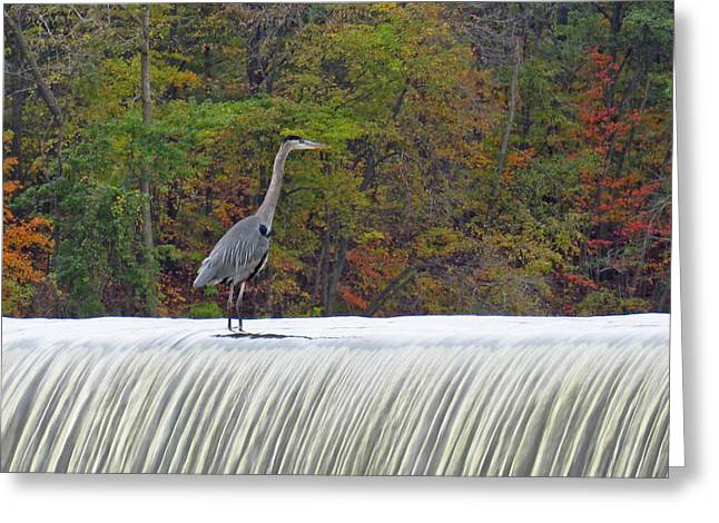 Autumn On The Maumee Greeting Card by Cathy Cooley