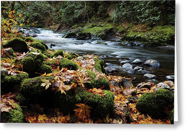 Autumn On The Salmon River, Welches Greeting Card