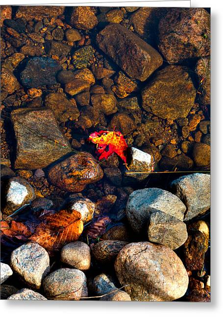 Autumn On The Shore Greeting Card