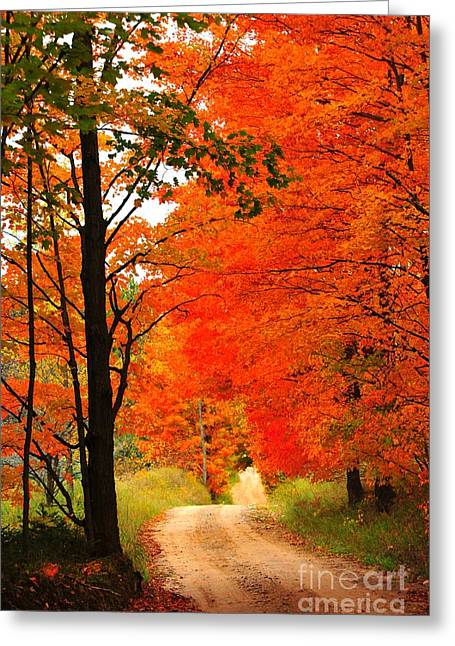 Autumn Orange 2 Greeting Card