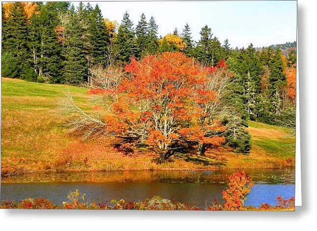 Greeting Card featuring the photograph Autumn Orange by Gene Cyr