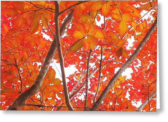 Autumn Orange Greeting Card by Scott Cameron