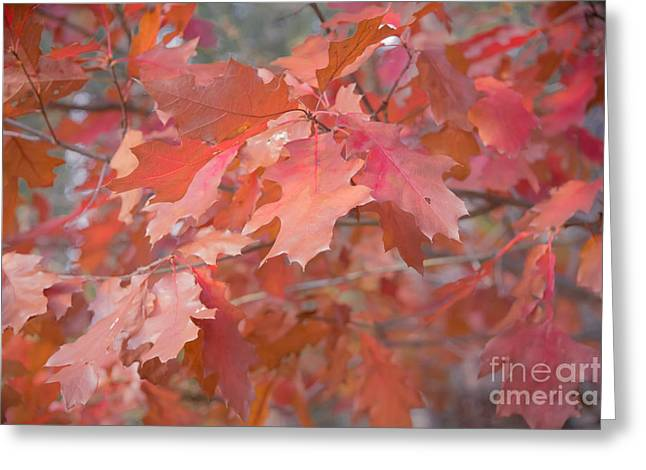 Autumn Paintbrush Greeting Card
