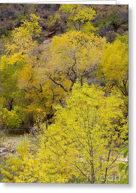 Autumn Palatte Greeting Card by John Blumenkamp