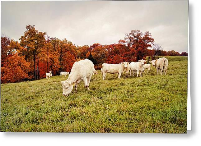 Autumn Pastures Greeting Card by Cricket Hackmann