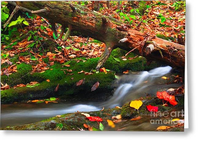 Autumn Paths Greeting Card by Everett Houser