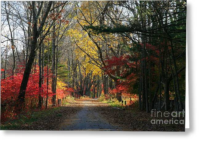 Autumn Paths    No.2 Greeting Card