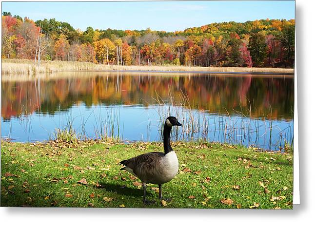 Autumn Pond Goose Greeting Card by Aimee L Maher Photography and Art Visit ALMGallerydotcom