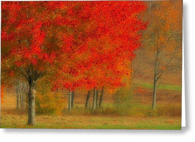 Autumn Popping Greeting Card by Karol Livote