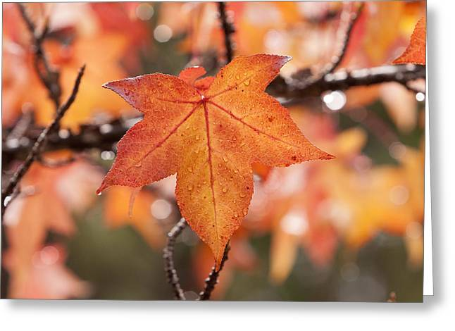 Autumn Rain Greeting Card by Michelle Wrighton