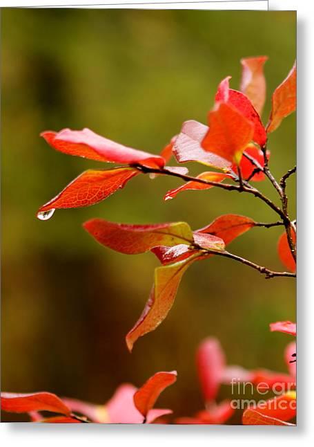 Autumn Raindrop Greeting Card