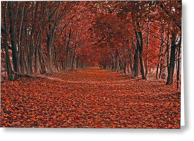 Greeting Card featuring the photograph Autumn by Raymond Salani III