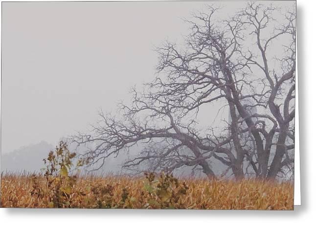 Autumn Reborn Greeting Card by Nikki McInnes