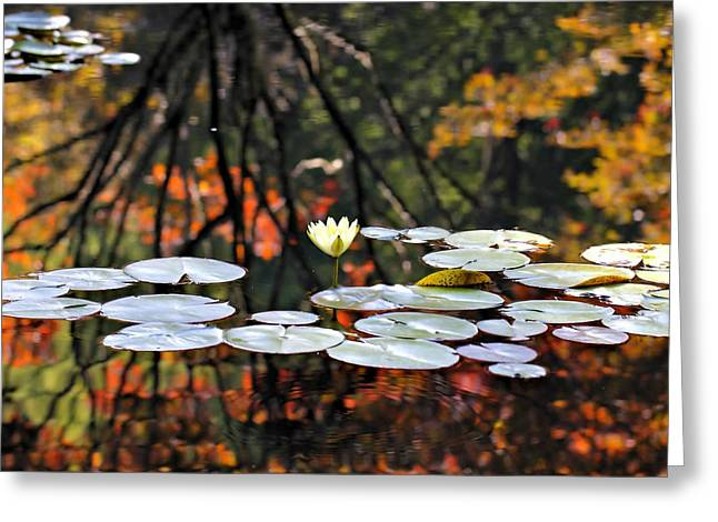 Autumn Reflection Greeting Card by Katherine White