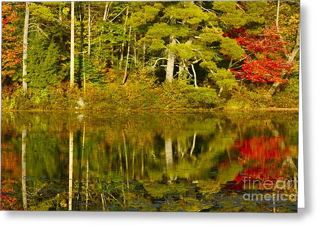 Greeting Card featuring the photograph Autumn Reflections by Alice Mainville