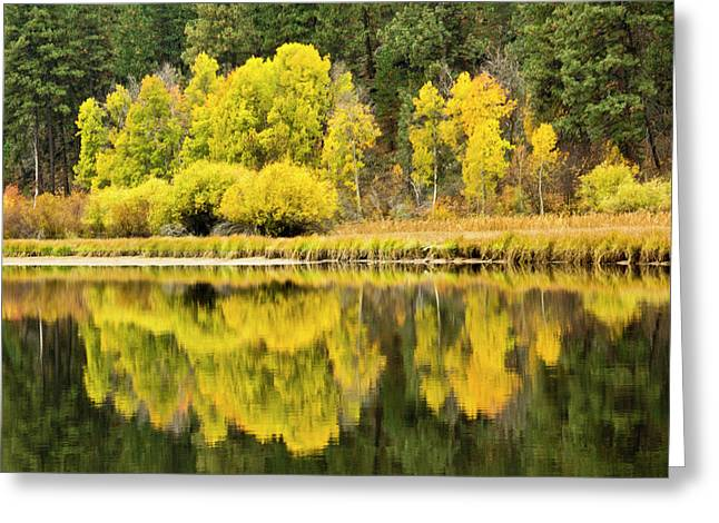 Autumn Reflections, Aspen Camp Greeting Card
