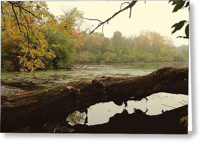 Autumn Reflections Greeting Card by Nikki McInnes