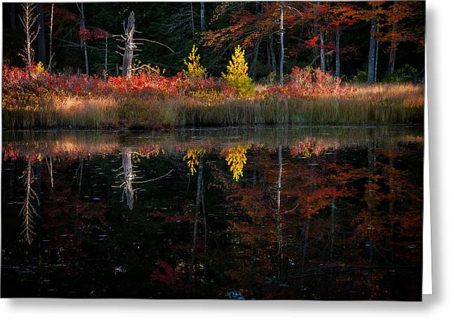 Autumn Reflections - Red Eagle Pond Greeting Card by Thomas Schoeller