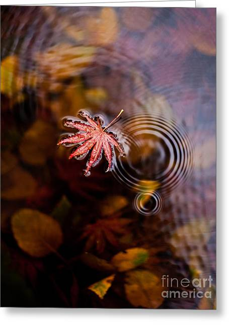 Autumn Ripples Greeting Card by Mike Reid