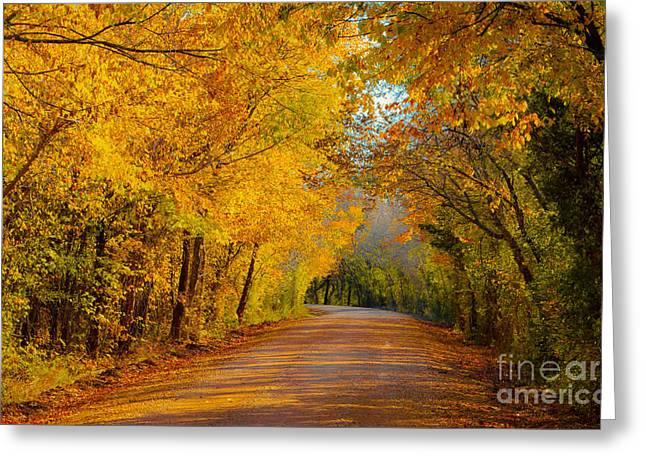 Autumn Road Greeting Card by John Roberts