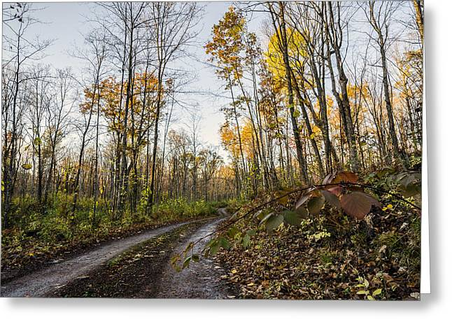 Autumn Road Greeting Card by Paul Geilfuss