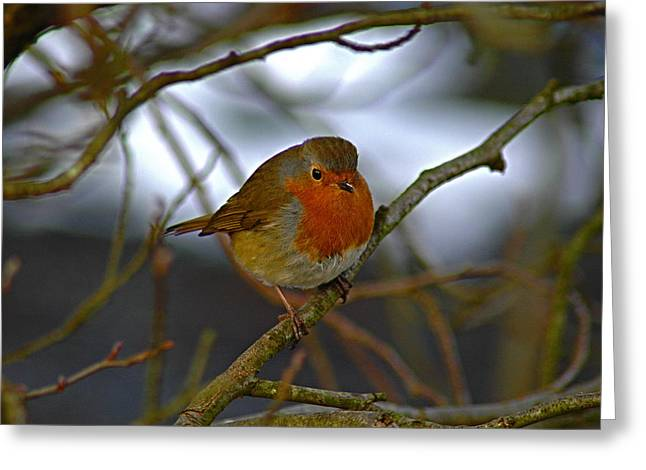 Autumn Robin Greeting Card by Kathy Spall